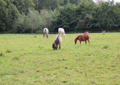 Koppel Pferde 735