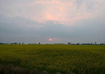 Sonnenaufgang Rapsfeld